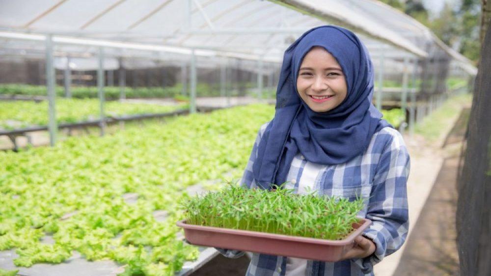 agroteknologi